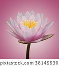 Abstract of pink waterlily on pink background 38149930