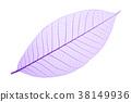 Purple decorative skeleton leaf on white 38149936