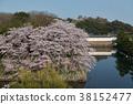 히코 네 성의 해자와 벚꽃 38152477