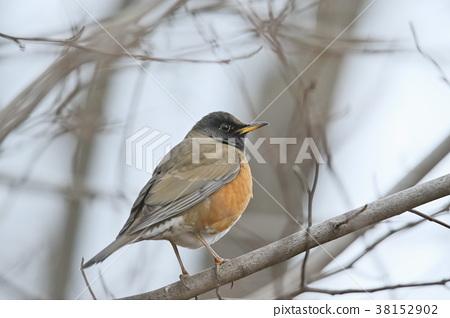 鳥兒 鳥 小鳥 38152902