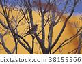 斑鶇 野生鳥類 野鳥 38155566
