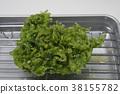 海白菜 天婦羅 蔬菜炸魚 38155782