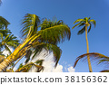 Image of Palm trees low angle view 38156362