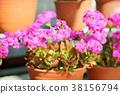 꽃, 플라워, 화분에 심은 식물 38156794