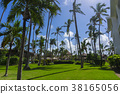 Image of Palm trees low angle view 38165056