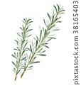herbal, rosemary, botanic 38165403