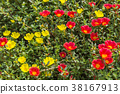 Background of small red and yellow flowers 38167913