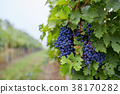 Bunch of blue grapes 38170282
