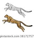 cheetah animal sketch 38172757