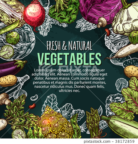 Vector sketch poster of natural farm vegetables 38172859