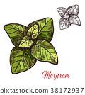 马郁兰 香草 树叶 38172937