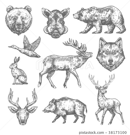Vector sketch wild animal icons for hunting or zoo 38173100