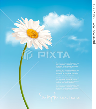 Beautiful white daisy in front of the blue sky. 38173464