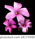 Romantic floral background. Flower. Rose  38174996