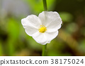white flower in garden spring season 38175024