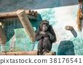 침팬지, 원숭이, 유인원 38176541