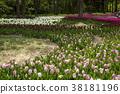 鬱金香 花床 花園 38181196
