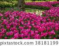 鬱金香 花床 花園 38181199