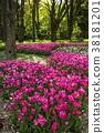 鬱金香 花床 花園 38181201