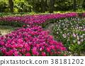 鬱金香 花床 花園 38181202