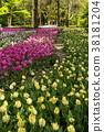 鬱金香 花床 花園 38181204