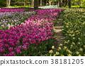 鬱金香 花床 花園 38181205