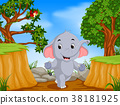 bird, cliff, elephant 38181925