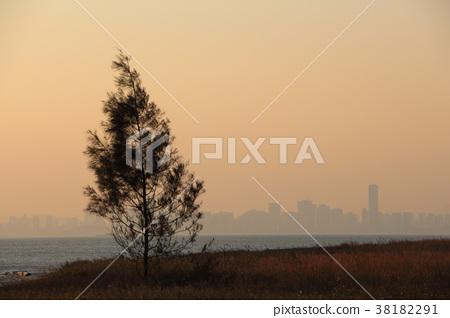 樹與中國大陸 38182291