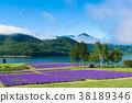 라벤더, 라벤더 밭, 여름 38189346