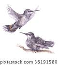 vector, bird, hummingbird 38191580