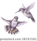 vector, bird, hummingbird 38191581
