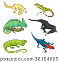 Chameleon Lizard, green iguana, Komodo dragon 38194695