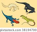 Komodo dragon monitor, American Sand lizard 38194700