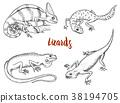 chameleon, reptile, lizard 38194705