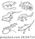 Chameleon Lizard, green iguana, Komodo dragon 38194714