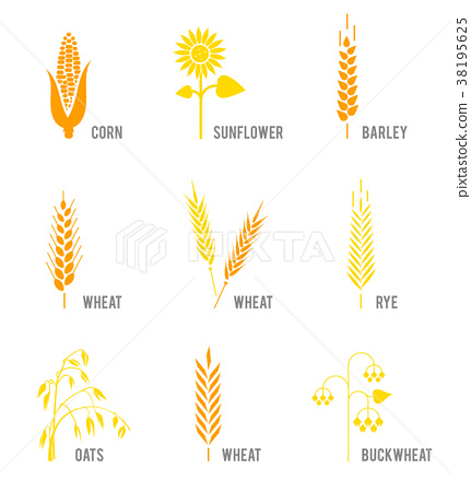 Cereal icons set with rice, wheat, corn, oats, rye 38195625