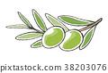 橄榄 水果 绿色 38203076