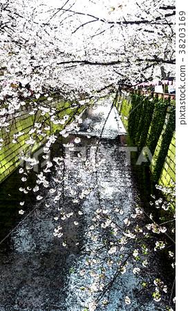 櫻花季節 38203169