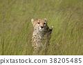 獵豹 38205485