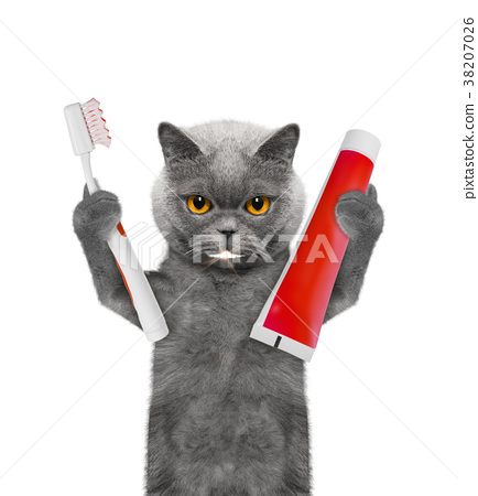 Cute cat clean the teeth with a toothbrush 38207026