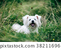 Cute fluffy white dog on the grass 38211696