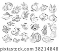 Set of isolated sketches of exotic, tropical fruit 38214848