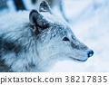 동물, 눈, 스노우 38217835