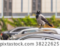 Crow on car roof. Bird sitting on car at city 38222625