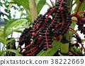 열매, 과실, 과일 38222669