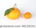 Giant Mandarin Orange 38226261