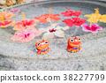 水 花朵 花卉 38227799
