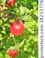 사과 나무 가을 이미지 결실의 가을 북국 이미지 38233776