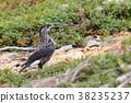 星鸦 野生鸟类 野鸟 38235237