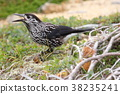 นก,สัตว์,ภาพวาดมือ สัตว์ 38235241